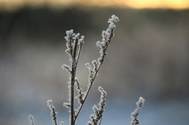 frost-1161681_1280