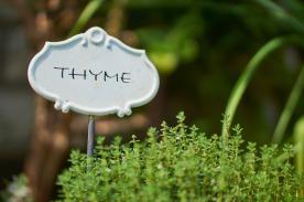 thyme-2337214_1280